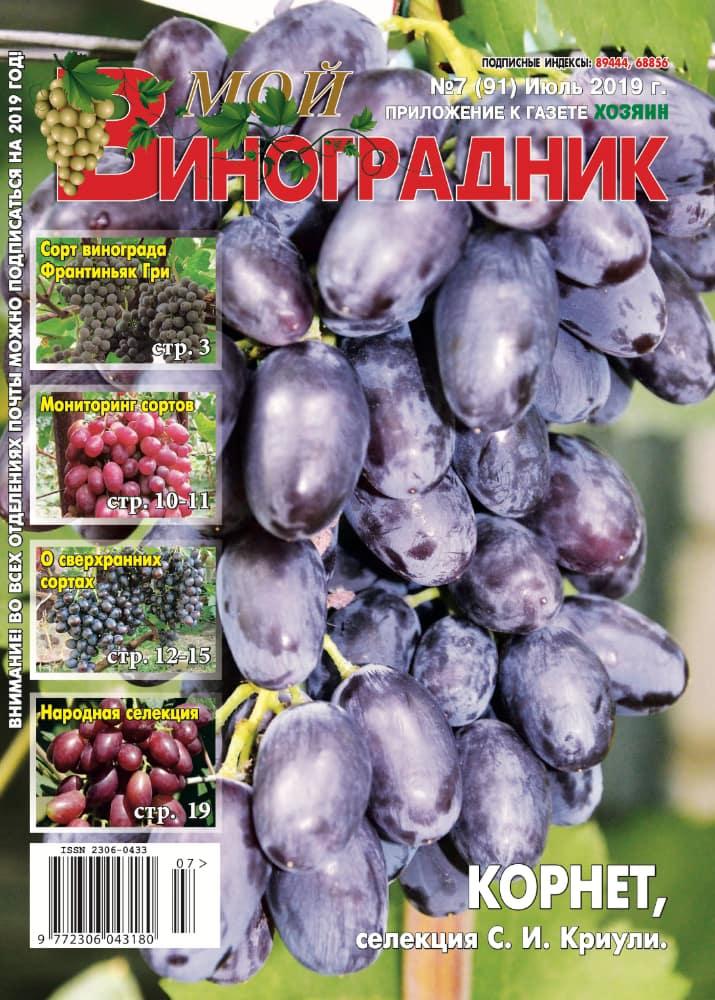 Мой виноградник, ИЮЛЬ 2019