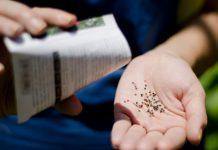 Выбираем семена: дражирование или инкрустация