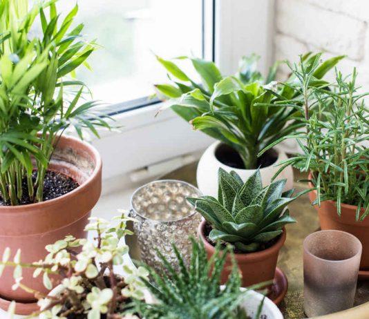 Зеленые домашние питомцы