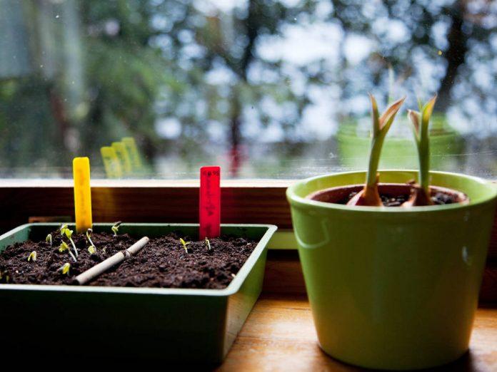 От плохого семени не жди хорошего племени: выбираем качественный материал