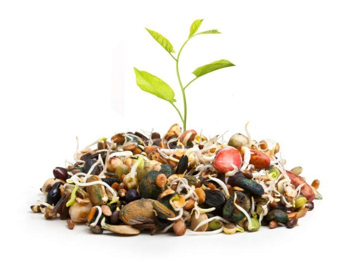 Пророщування насіння рулонним методом