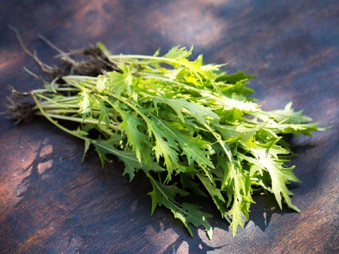 Мизуна - надежная зелень до самых морозов