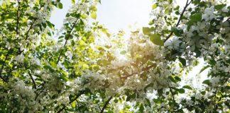 Сад у квітні