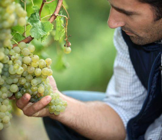 Виноградник здравого смысла