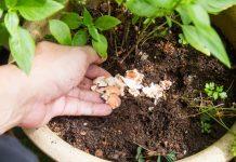 Натуральные удобрения - залог здоровья растений и человека