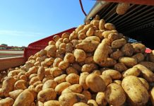 Чтобы уродил картофель