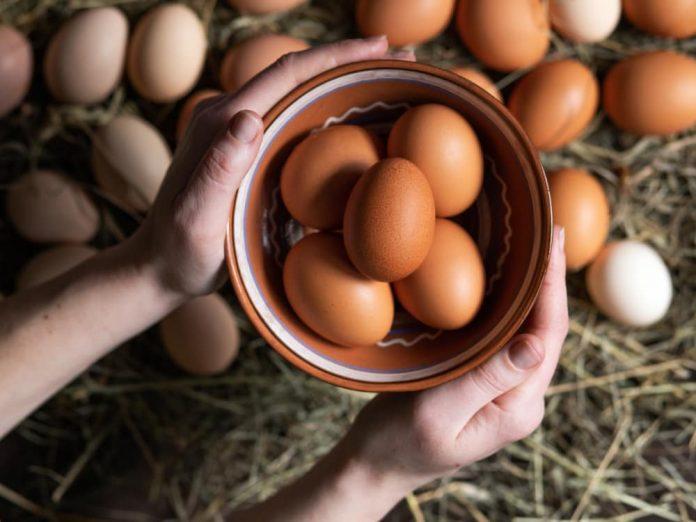 360 яиц за год - столько дают куры гибрида Декалб