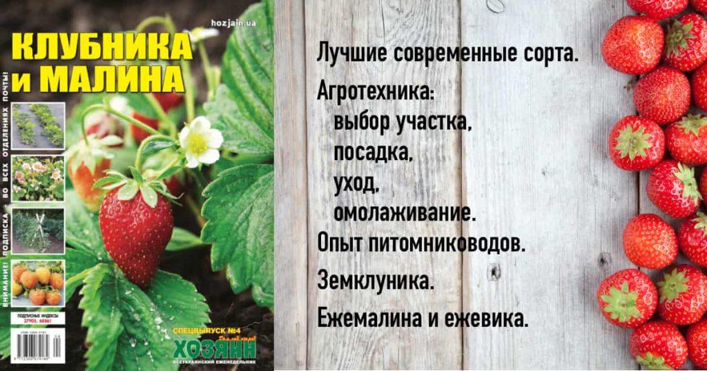 """Спецвыпуск """"Клубника и малина"""""""