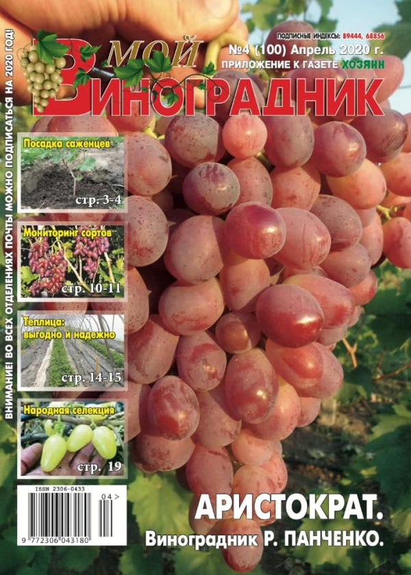 Мой виноградник, №4 2020