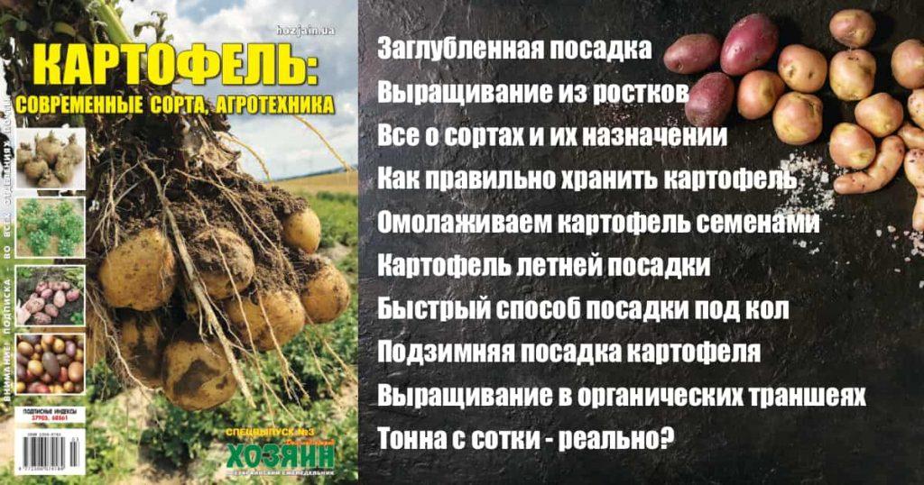 Картофель: современные сорта, агротехника