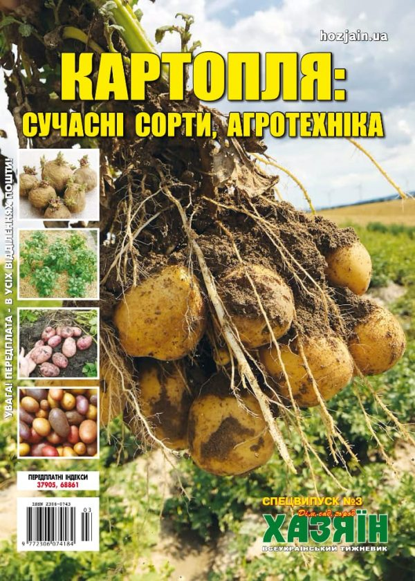 Картопля: сучасні сорти, агротехніка
