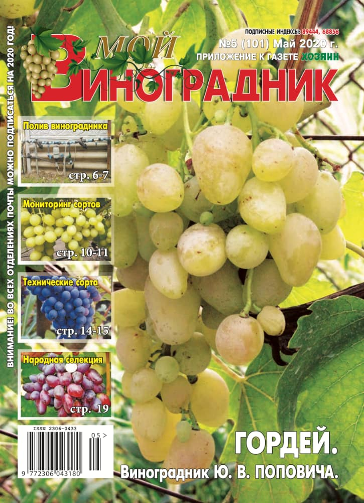 Мой виноградник, №5 2020