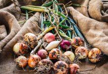 Как сохранить лук до нового урожая