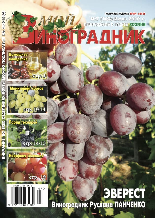 Мой виноградник, №7 2020