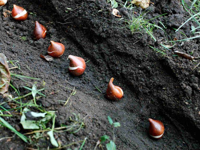 Сетка защитит луковичные от мышей