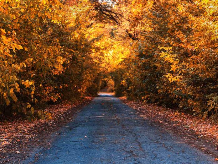 И снова — осень...