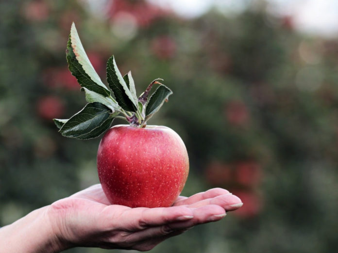 Яблонька на балконе