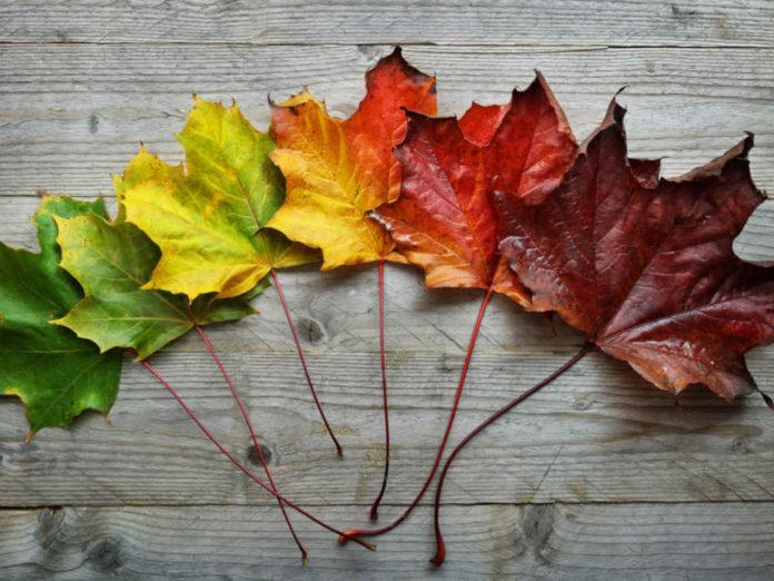 Осенние нотки