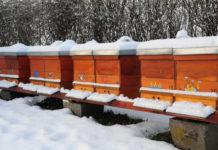 Пасека: на зимние квартиры