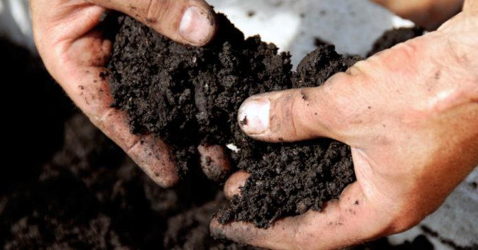 Чем накормить землю