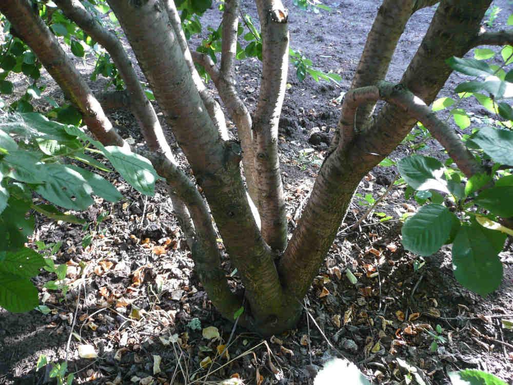 Формируем деревья-чаши