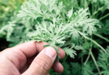 Простые и надежные средства защиты растений