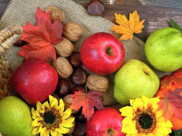 Собираем урожай зимних яблок и груш