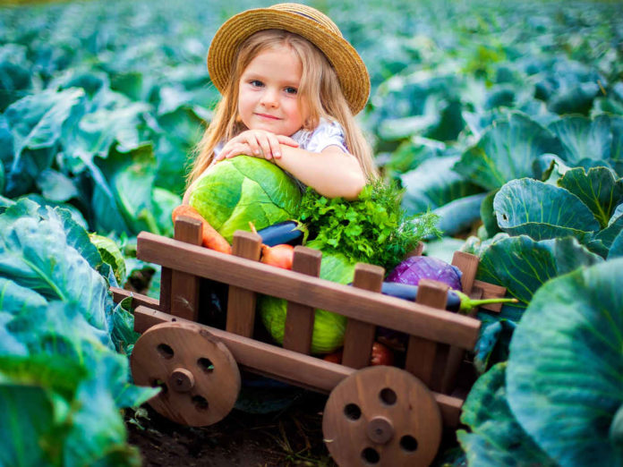 Сохраняем капусту