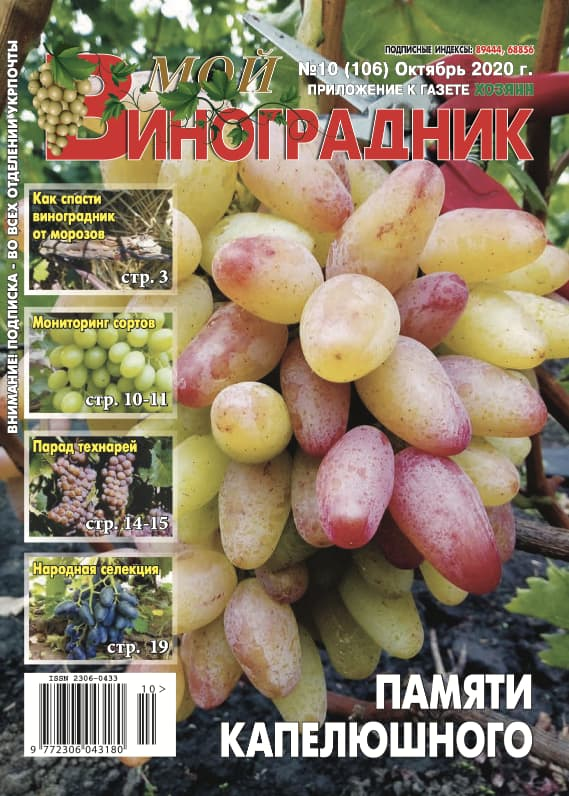 Мой виноградник, №10 2020