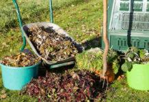 Ноябрьские хлопоты садовода