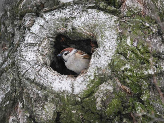 Если в дереве дупло...