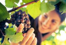 Так зовут виноград и романтичных женщин