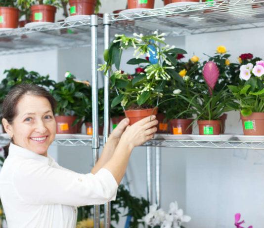 Ароматы в доме зимой принесут цветущие растения