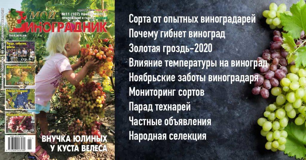 Мой виноградник, №11 2020