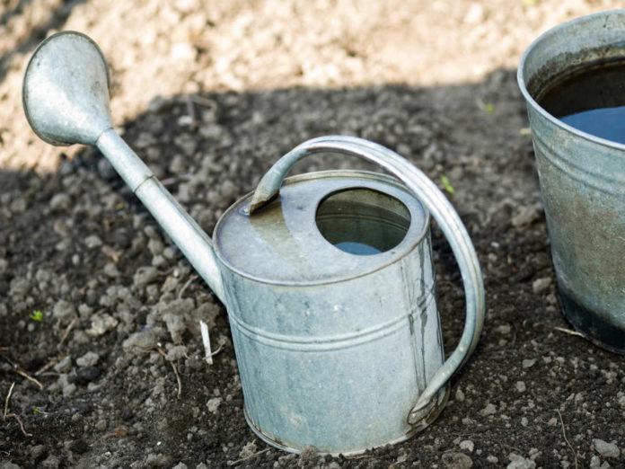 Как поливать сад под зиму