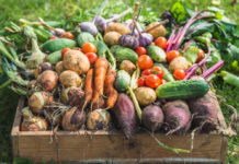 Лучшие овощи для большого урожая