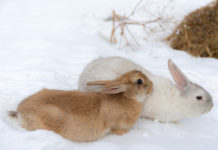 Содержание кроликов зимой