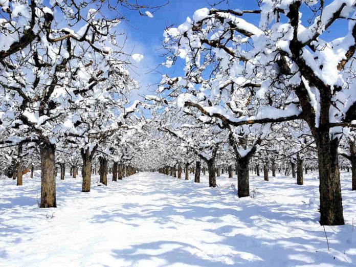 Уход за деревьями после снегопада