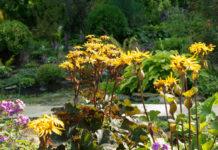 Монументальные растения в саду