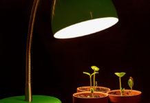 Досвечивание домашних растений зимой