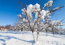 Защита сада от грызунов зимой