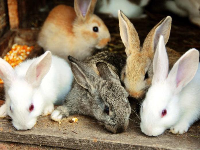 Как мы создавали дружную кроличью семью