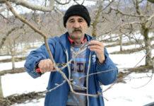 Особенности зимней обрезки сада