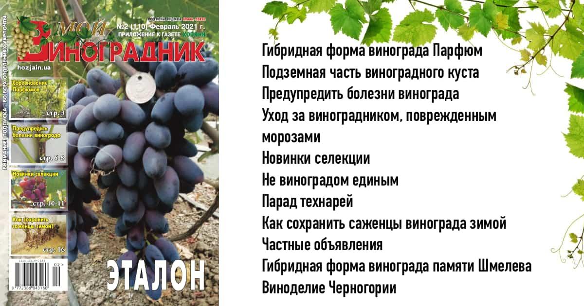 Мой виноградник №2/2021