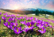 И вечная весна!