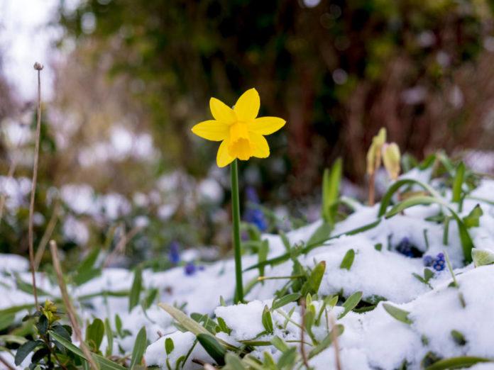 Чого не вистачає рослинам після зими?