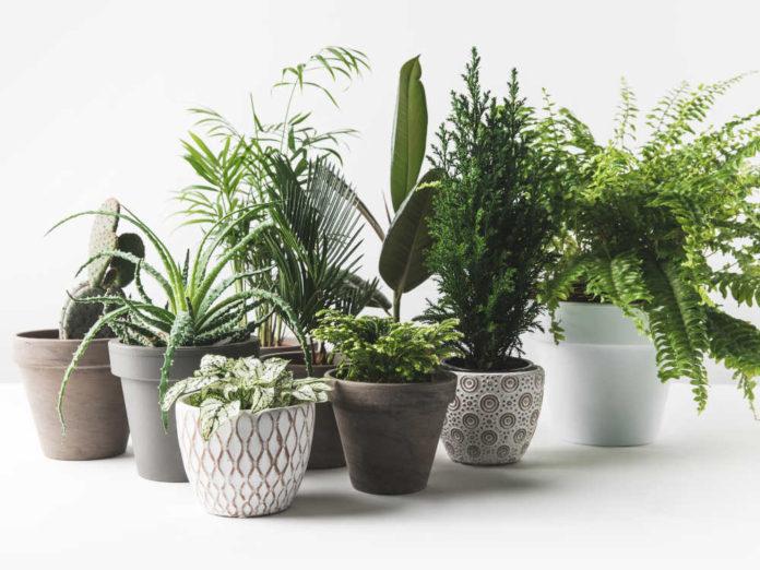Комнатные растения после зимы