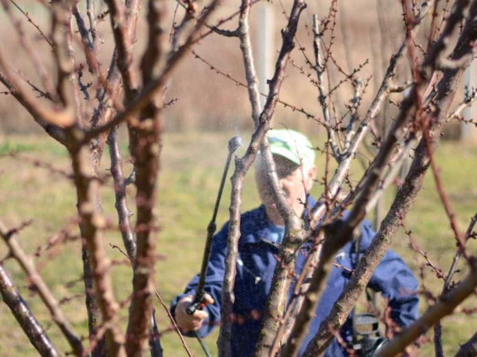 Весенние профилактические обработки сада. Против болезней и вредителей